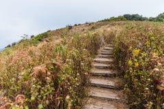 对山的台阶方式与金黄草和绿色灌木与森林在背景中和灌木操刀到Kew Mae平底锅 库存图片