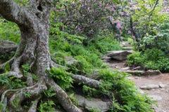 对崎岖的庭院阿什维尔北卡罗来纳的岩石足迹 库存图片