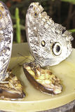 对巨人Caligo oileus, Oileus巨型猫头鹰蝴蝶, ama 免版税图库摄影