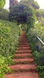 对常青树的楼梯 图库摄影