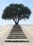 对平静的树的步 免版税库存照片