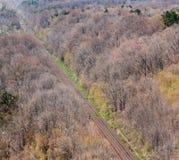 对平直的火车轨道在森林里 免版税图库摄影