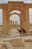 对扇叶树头榈古庙区域的入口在叙利亚 库存图片