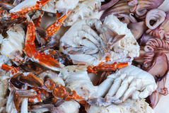 对新美味的被蒸的海鲜背景的特写镜头 库存照片