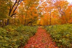 对方式的秋天 库存照片