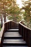 对木桥的台阶 库存图片