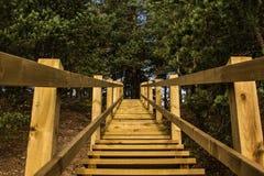 对杉木森林的木台阶残暴的人蓝色小山的停放 免版税库存图片