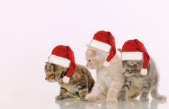 对某事感兴趣的三只可爱的毛茸的小猫在白色ba 免版税库存照片