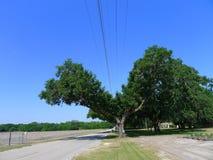 对树的人的损伤 库存图片