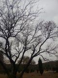 对树的冬天作用 库存照片