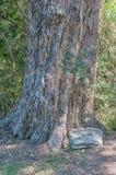 对树的抒情诗 免版税库存图片