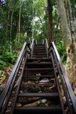 对森林的入口 免版税库存图片