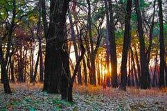 对森林的日落告别耕种早晨 免版税库存照片