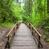 对森林的木楼梯 免版税库存照片