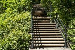 对森林的楼梯 免版税库存图片