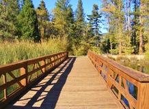 对森林的红色木桥 免版税图库摄影