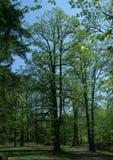 对森林的网关春天 库存照片