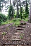 对森林足迹的步 免版税库存照片