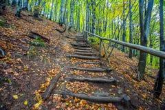 对森林,国家公园Bieszczady波兰的楼梯 免版税库存图片