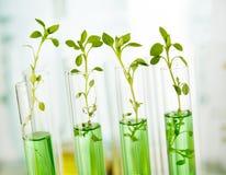 对植物的实验室分析 免版税库存照片