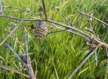 对此的伞纸质黄蜂` s巢 免版税库存照片