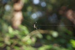 对此的凉快的蜘蛛是网 免版税库存照片