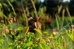 对比水多的绿色和狂放的杏子红色分支在阳光下 r 库存照片