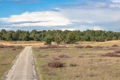 对沙丘的看法沿在美丽的欧石南丛生的荒野的一个自行车方式 免版税库存照片