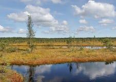 对沼泽的看法 图库摄影