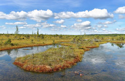 对沼泽的看法 库存照片