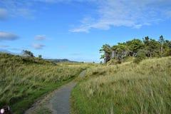 对海滩的走道在森林公园,Co Donegal,爱尔兰 免版税库存照片