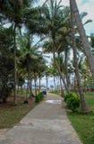 对海滩的通入在道路穿过棕榈 免版税库存图片