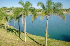 对海滩的方式与棕榈树在基韦斯特岛佛罗里达 免版税图库摄影