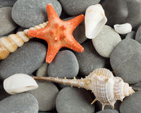 对海洋软体动物和星形的背景 免版税库存照片