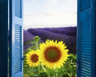 对淡紫色领域的窗口 库存照片