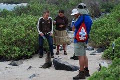 对游人的加拉帕戈斯下个密封 库存图片