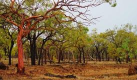 对湿季节乔治城QLD澳大利亚的刷新的开始 图库摄影