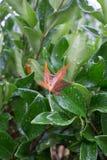 紧贴对湿绿色灌木的布朗事假 免版税图库摄影
