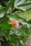 紧贴对湿绿色灌木的布朗事假 库存图片