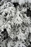 对滑雪胜地冻结的结构树的视图在倾斜 库存照片
