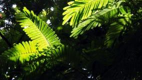 对瀑布Baguite的密林步行 库存照片