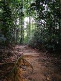 对热带密林的迁徙的足迹 免版税库存照片