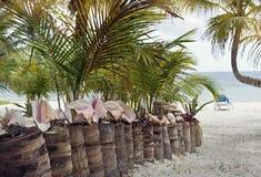对热带海滩的方式 免版税库存图片