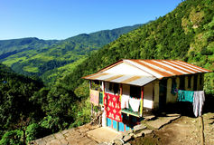 对牛拉车旅行的annapurna森林喜马拉雅横向 免版税库存照片