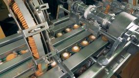 对生产线的殷勤态度由工作者的曲奇饼的 股票视频