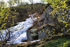 对生活自然的春天温暖地晒黑 免版税库存图片