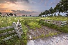 对用母牛荷兰芹花装饰的草甸的门 免版税图库摄影