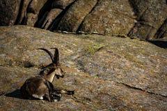 对石头的热 居住的自然 免版税库存照片