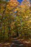 对秋天视图的足迹 免版税库存图片