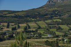 对种植园的美丽的景色 免版税图库摄影